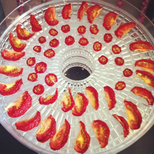 sundried-tomatos-in-the-dehydrator