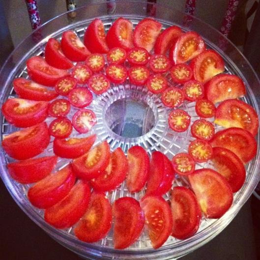tomatos-ready-for-dehydrator